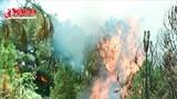 Cháy rừng thông ở Đô Lương