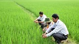 Nghệ An: Đưa nhiều giống lúa chất lượng cao vào sản xuất vụ xuân