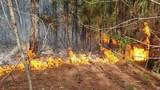 Dập tắt đám cháy rừng ở xã Quỳnh Lộc, thị xã Hoàng Mai