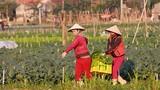 Nông dân Nghệ An ngày càng phát huy vai trò chủ thể trong xây dựng nông thôn mới