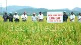 Bảo hiểm cây lúa: Chia sẻ rủi ro với nông dân