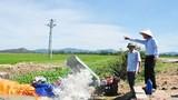 Hưng Nguyên: Nhiều diện tích lúa bị khô hạn