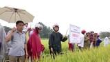 Anh Sơn: Hội thảo giống lúa thuần Thiên ưu 8