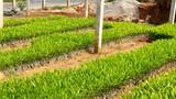Hàng chục triệu giống cây lâm nghiệp chưa thể kiểm soát về chất lượng