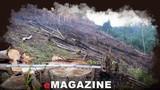 Quỳ Châu: 'Máu rừng' lại chảy