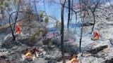 Cháy rừng ở Diễn Châu đã lan sang huyện Yên Thành