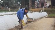 Nghệ An: Diện tích lúa SRI đạt trên 10.000 ha
