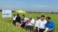 Hiệu ứng tích cực từ 13 cánh đồng lớn ở Hưng Nguyên