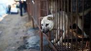 Đài Loan sẽ khởi tố 2 lao động Việt về tội làm thịt chó