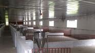 Bị xử phạt 150 triệu đồng vì xây dựng trang trại lợn khi chưa đảm bảo môi trường