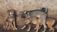 Hai bố con ở Hòa Bình tử vong vì chó dại cắn
