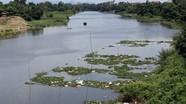 Nhiều xác lợn chết trôi trên sông ở Hà Nội