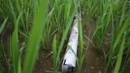 Nam thanh niên tử vong bất thường khi đi bắt lươn