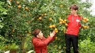 Vườn cam đặc sản Hiếu - Đoàn - Hoàn ở quê lúa Yên Thành