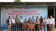 Báo Nghệ An tặng bò sinh sản - thêm sinh kế thoát nghèo cho xã Xiêng My (Tương Dương)