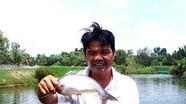 Lạ: Mỗi ngày nuôi cá bằng... 1 tấn bánh bao hết hạn