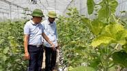 Nghệ An hỗ trợ 5 tỷ đồng sản xuất vụ đông trên đất 2 lúa