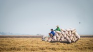 Thủ tướng Nguyễn Xuân Phúc đồng ý nối lại xuất khẩu gạo