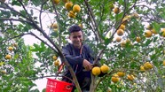 Yên Thành (Nghệ An) nâng cao giá trị nông sản tiêu biểu