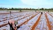 Nghi Lộc và 33 xã của Diễn Châu chuyển sang trạng thái bình thường mới