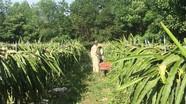 100% xã ở Đô Lương đạt tiêu chí số 13 về tổ chức sản xuất trong nông thôn mới