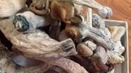 Nam sinh trồng 'nấm thức thần' bị khởi tố