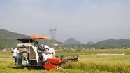 Huyện Yên Thành có 3.577 hộ tham gia bảo hiểm cây lúa vụ hè thu - mùa