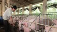 Giá thịt lợn đang đỉnh cao nhất thế giới, chỉ một cuộc họp lập tức tụt giảm