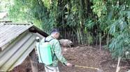 Quế Phong vận động người dân nhốt lợn để phòng dịch