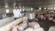 Nghệ An: Giá thịt lợn ở chuồng và chợ chiều hướng giảm mạnh, siêu thị vẫn mức cao