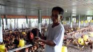 Hàng vạn con gà VietGAP ở Diễn Châu chưa tiêu thụ được vì dịch Covid-19
