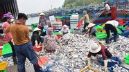 6 tháng, ngư dân Nghệ An thu gần 2.000 tỷ đồng từ đánh bắt hải sản