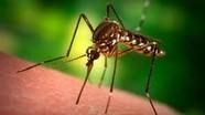 5 mẹo đuổi muỗi cực đơn giản mà hiệu quả trong ngày mưa ẩm