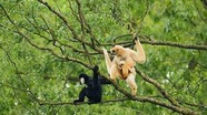 Tăng cường hợp tác liên ngành bảo vệ động vật hoang dã tại Vườn Quốc gia Pù Mát