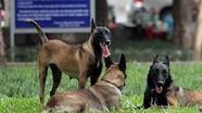 Chủ vật nuôi có thể bị phạt 5 năm tù nếu để chó cắn chết người