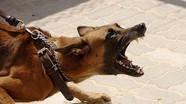 Bé trai 7 tuổi ở Nghệ An tử vong nghi do chó dại cắn