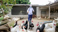 Nghệ An ra công điện khẩn phòng, chống chủng virus cúm gia cầm nguy hiểm