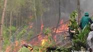 Tăng cường phối hợp hạn chế thấp nhất các vụ cháy rừng trong năm 2019