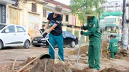 TP. Vinh thay thế hàng loạt cây xanh trên tuyến phố đi bộ Nguyễn Văn Cừ