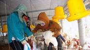 Cảnh báo nguy cơ cao dịch bệnh gia súc, gia cầm bùng phát dịp cuối năm