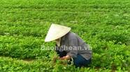Phun thuốc diệt cỏ, cỏ mọc nhiều hơn?