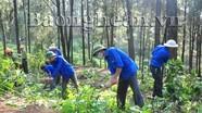 Phát động chiến dịch phòng cháy chữa cháy rừng