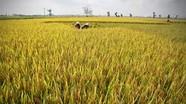 Tăng mức hỗ trợ phí bảo hiểm nông nghiệp cho hộ cận nghèo