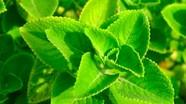 7 bài thuốc trị ho hiệu quả bằng củ cải và vỏ bưởi