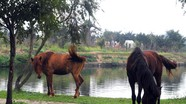 Xe ngựa Vinh xưa