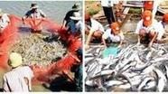 Chính sách tín dụng cho người nuôi tôm, cá tra