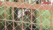 Vườn Quốc gia Pù Mát nhận bàn giao 2 cá thể hổ