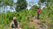 Xử lý khai thác rừng trái phép ở xã Quỳnh Văn: Chưa thỏa đáng!?