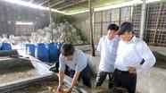 Chế biến sứa ăn liền tại Diễn Châu