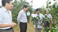 HĐND tỉnh giám sát việc sử dụng đất tại huyện Anh Sơn